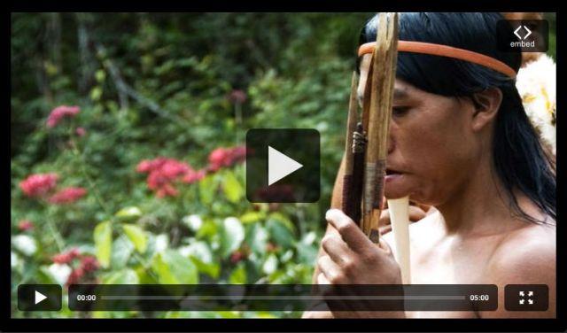 Les indiens zo d amazonie le regard commence changer for Les idees de zoe